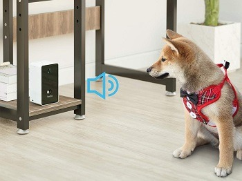Iseebiz Cat Camera Treat Dispenser review