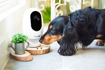 Pawbo Life Cat Camera Treat Dispenser review (1)