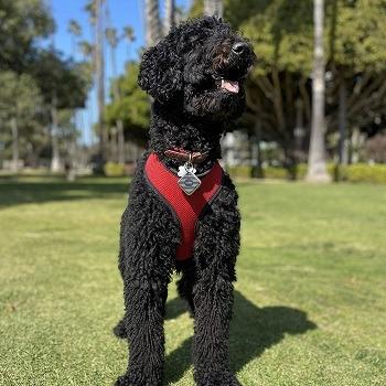 Cube Pro Bluetooth Dog Tracker