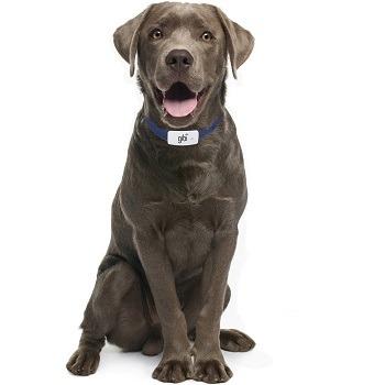 Gibi Dog Locator Collar