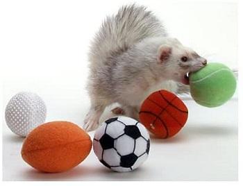 Marshall Ferret Sport Balls Review