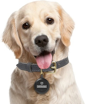 Pawscout Dog Tag Review