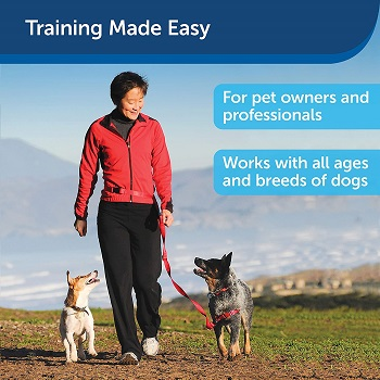 PetSafe Manners Minder For Dogs Review