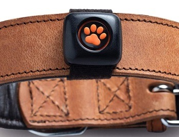 PitPat 2 Dog Activity Monitor Review