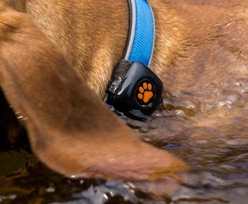 PitPat 2 Dog Activity Monitor