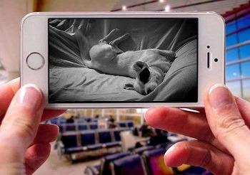 TOOGE Indoor Dog Camera review