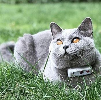 Weenect Smallest Cat GPS