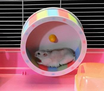CSWO Transparent Hamster Tank