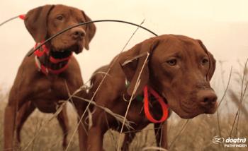 Dogtra Pathfinder GPS Collar