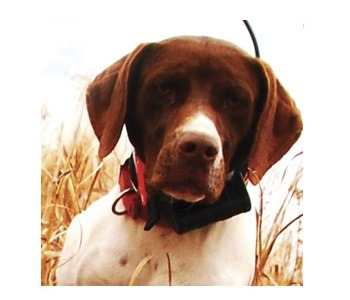 Garmin Astro 220 GPS For Hunting Dogs