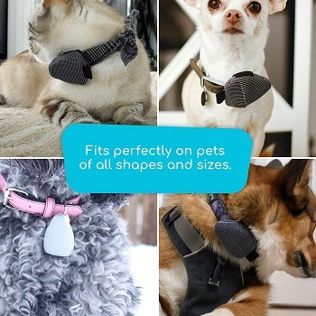 Jiobit Small Dog Tracker Review