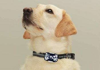 PetBiz G20 Animal GPS Collar Review