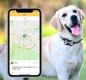 PetBiz G20 Animal GPS Collar