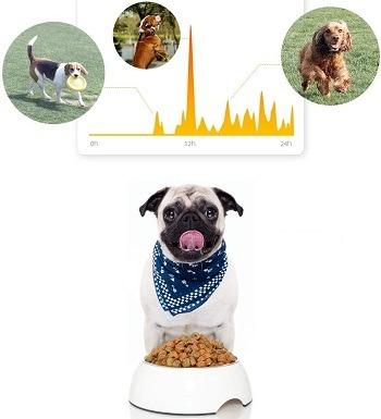 PetKit Lightweight Activity Monitor