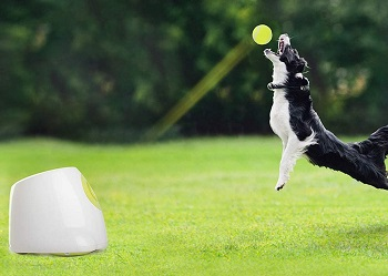 All for Paws Automatic Ball Launcher