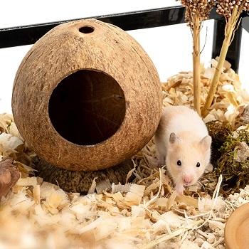 Andwe Coconut Hut Hamster House