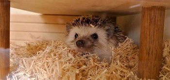 Best Hedgehog Cage Bedding Review
