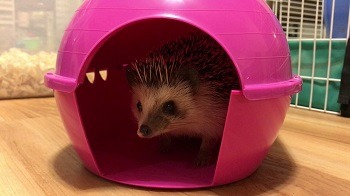 Best Hedgehog Cage Hideouts Review
