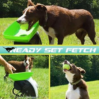 Franklin Pet Supply Ready Set Fetch