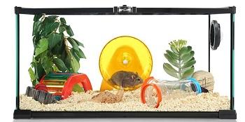 Hamster House Transparent Enclosure Review