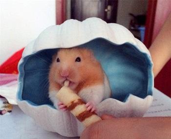 Laak Ceramic Hamster Hideout Review
