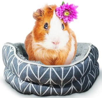 SunGrow Guinea Pig Cuddle Cup Review