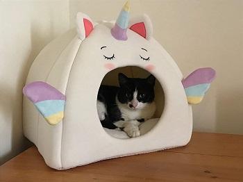 All Fur You Unicorn Cat Cave