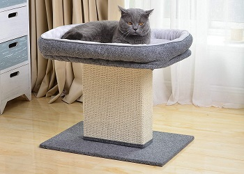 Catry Scratcher Review