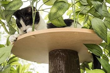 On2Pets Climbing Cat Tree Furniture