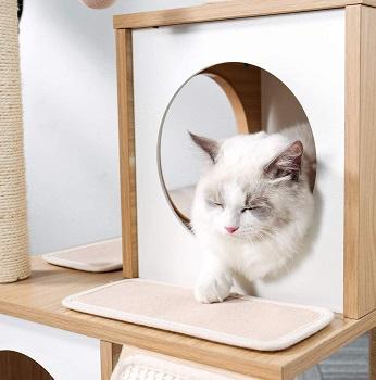 Pawz Cat Tree Review