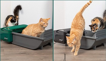 Pet Zone Smart Scoop Automatic Litter Box Review