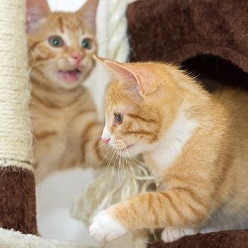 Petmaker Nice Cat Tower