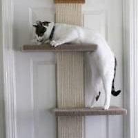 SmartCat Wall Door Cat Tree Climber Summary