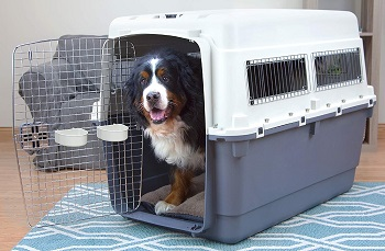 BEST OF BEST DOG CRATE FOR FLYING