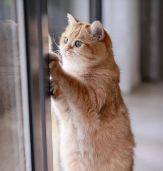 cat in captivity