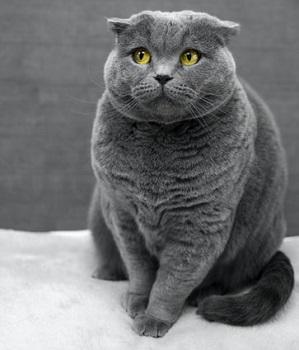 sad cat with arthritis
