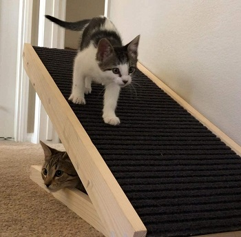 Alpha Paw Cat Ramp review