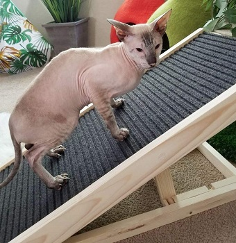 Alpha Paw Cat Ramp