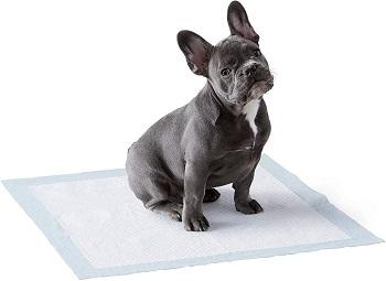 Amazon Basics Dog Potty Training Pads