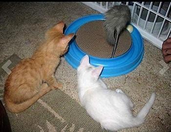 Auoon Cat Scratcher review