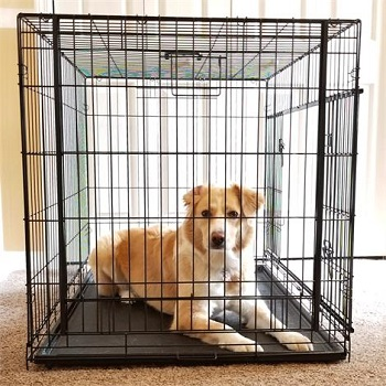 Cardinal Gates Sliding Door Pet Crate