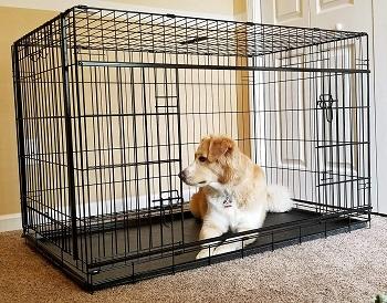 Cardinal Gates Sliding Door Pet Crate Review