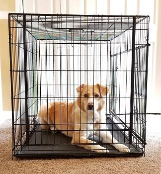 Cardinal Gates Sliding Door Pet Crate