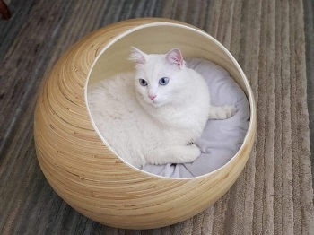 Fhasso Igloo Cat Cave Bed Review