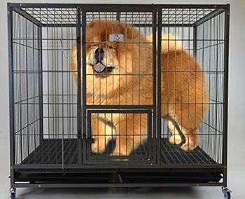 BEST METAL 48 INCH HEAVY DUTY DOG CRATE