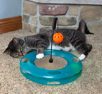Kitty City Cat Toy review