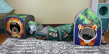 Kitty City Collapsible Cat Jungle Review