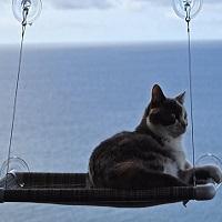 Kitty Cot Window Cat Perch Summary