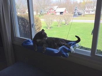 Kitty Cot Window Cat Perch