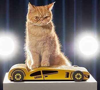 Lorde Cat Scratcher
